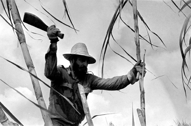 Κόβοντας ζαχαρότευτλα στην Κούβα (1970). Η ζάχαρη είναι ένα από τα σημαντικότερα προϊόντα που εξάγει η νησιωτική χώρα. Το οικονομικό εμπάργκο των ΗΠΑ αφαίρεσε έναν σημαντικό εισαγωγέα από την Αβάνα
