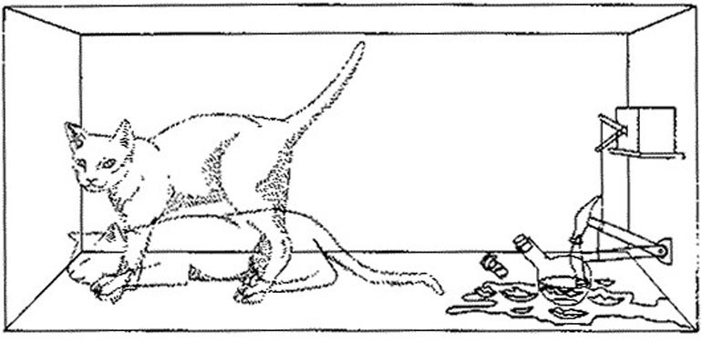 Η γάτα του Σρόντινγκερ, το γνωστό παράδειγμα επεξήγησης των παράδοξων Κβαντικών Νόμων
