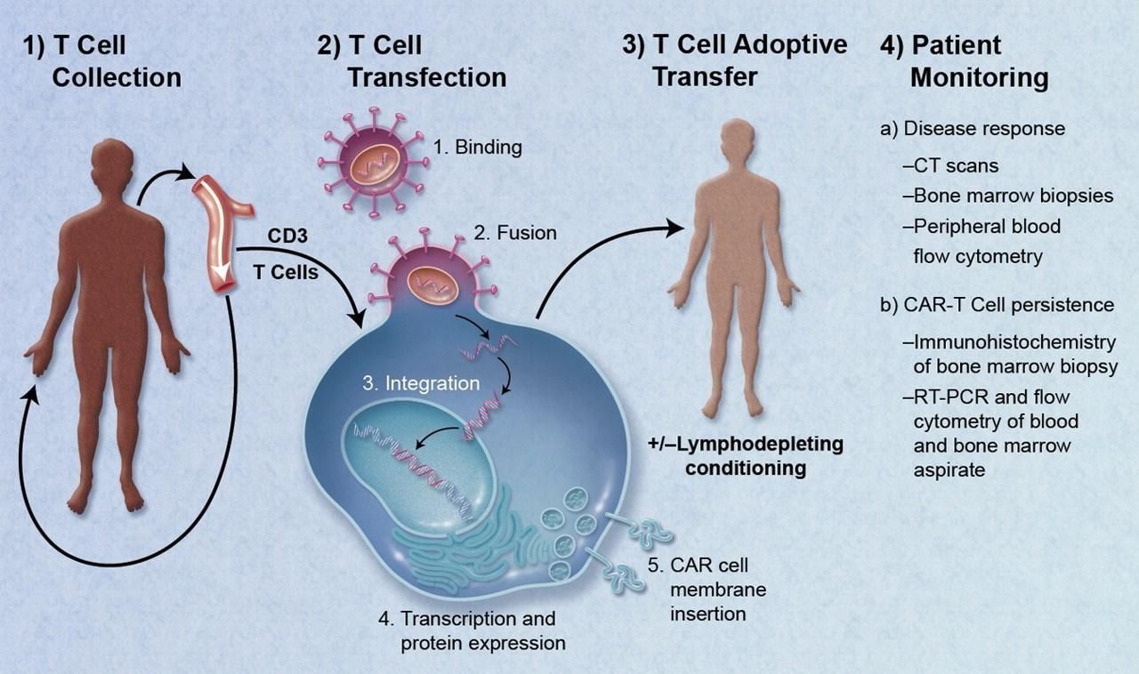 Αρχίζει η επανάσταση για τη θεραπεία του καρκίνου image