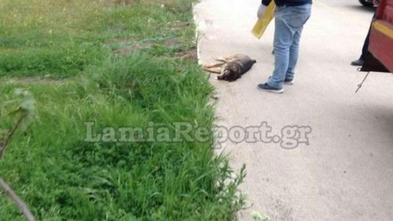 Μαζική δολοφονία αδέσποτων ζώων στη Λαμία Image