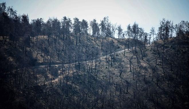 Κατά 99% η πυρκαγιά στην Εύβοια οφείλεται σε εμπρησμό | Ελλάδα |  | Εμπρησμός | Ελλάδα | Ορθοδοξία | online